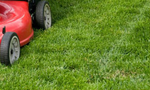 Lawn Mowing Finsbury Park