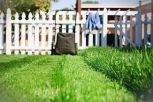 grass-cutting-services-finsbury-park